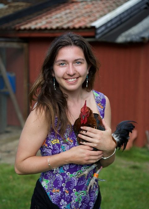 My undergraduate research: why blood is thicker than water for mating roosters